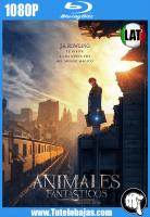 Descargar Animales fantásticos y dónde encontrarlos (2016) 1080P Full HD Español Latino, Inglés Gratis